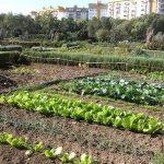 Urban garden picture